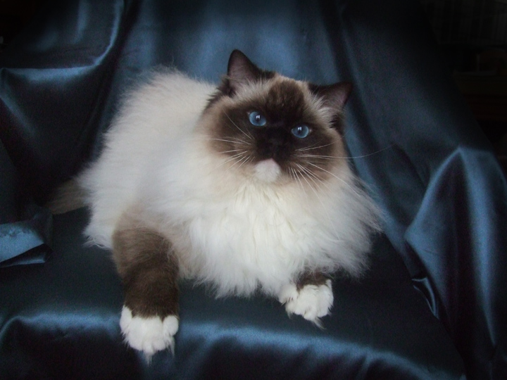 Cats For Sale In Attawa